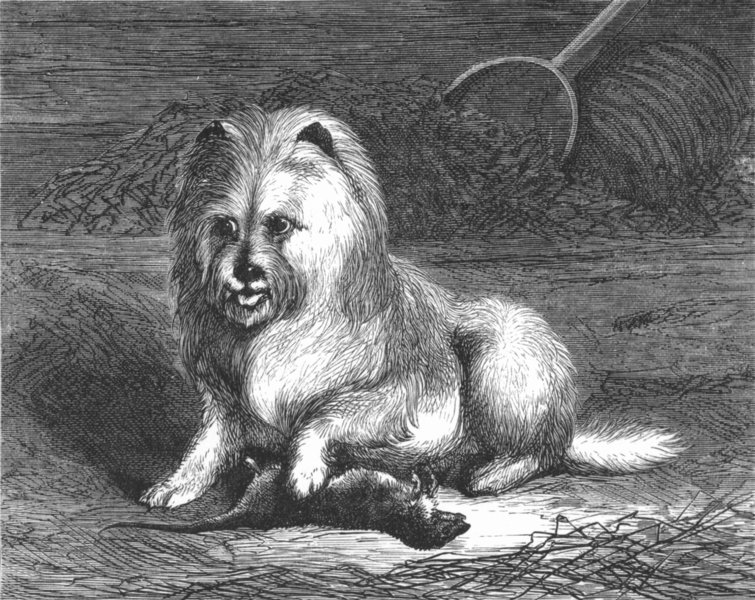 Associate Product DOGS. Vixen-Landseer (1821) c1880 old antique vintage print picture