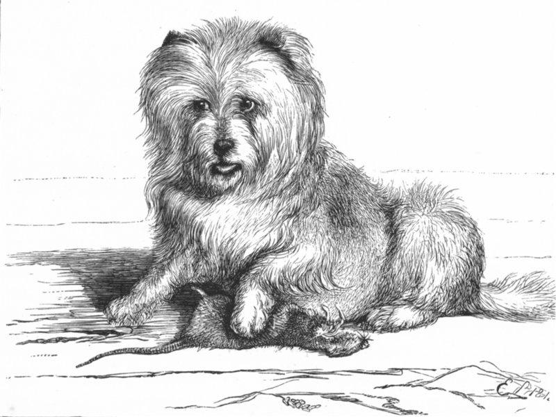 Associate Product DOGS. Vixen-Landseer (1824) c1880 old antique vintage print picture