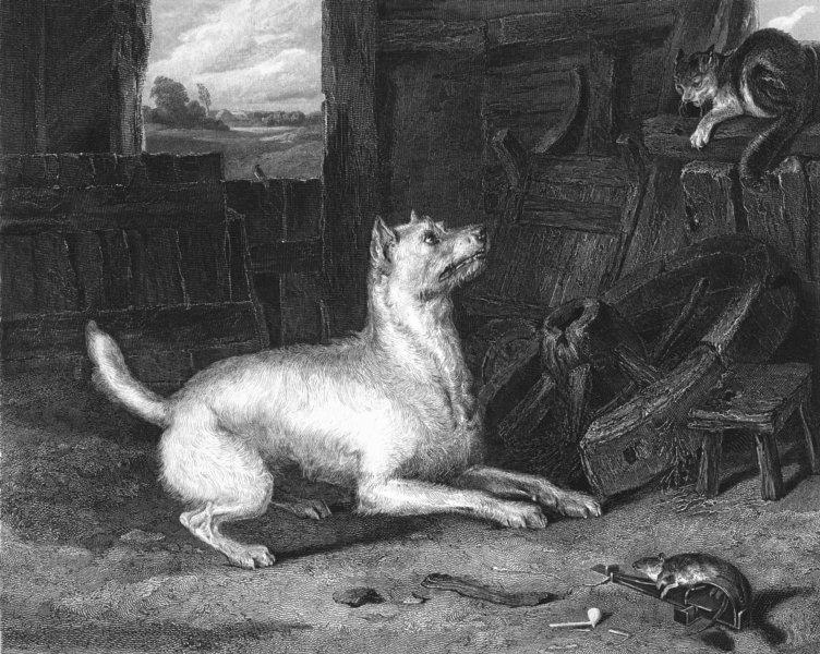 Associate Product CATS. The Intruder-Landseer c1880 old antique vintage print picture