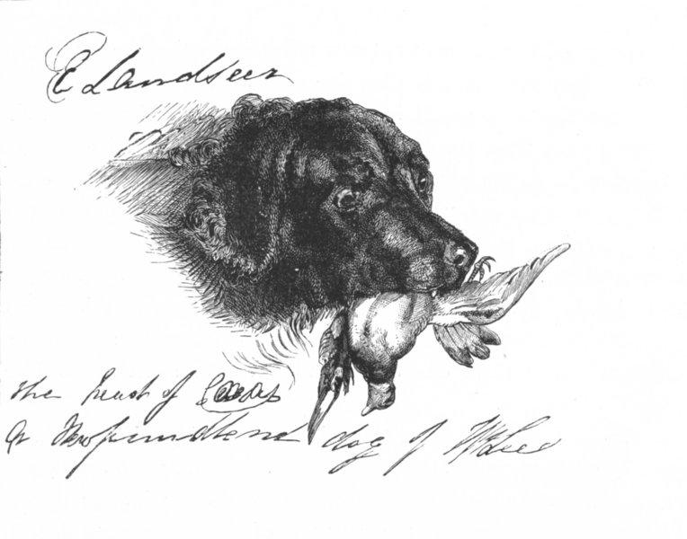 Associate Product DOGS. Caesar-Landseer c1880 old antique vintage print picture