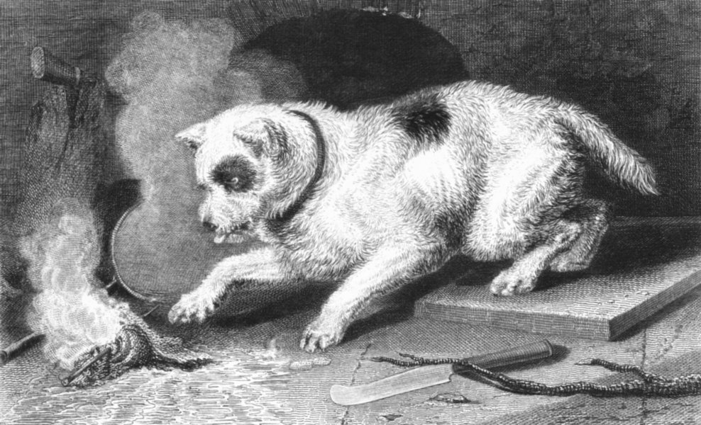 Associate Product DOGS. Too hot to hold-Landseer c1880 antique vintage print picture
