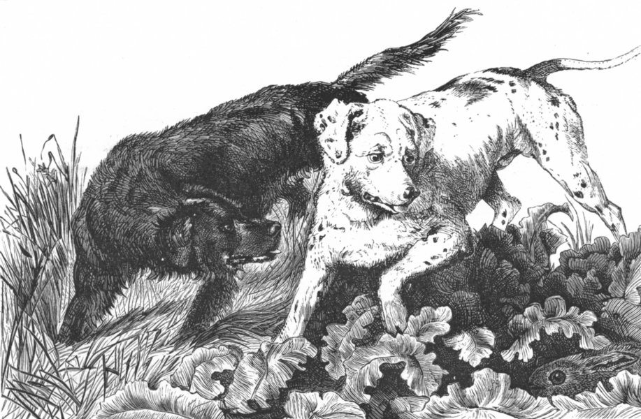 Associate Product DOGS. Dogs setting a hare-Landseer c1880 old antique vintage print picture