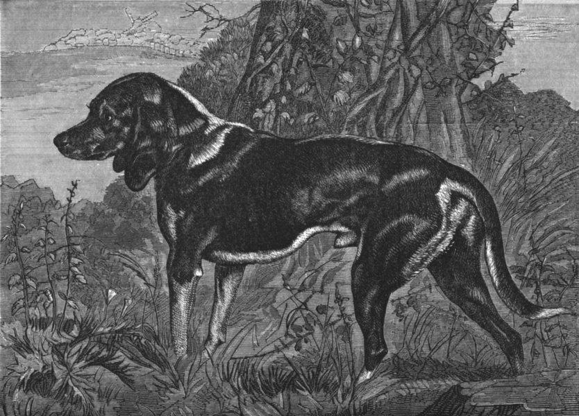 Associate Product DOGS. A Beagle-Landseer c1880 old antique vintage print picture