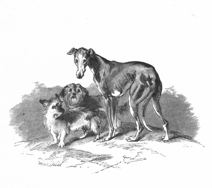 Associate Product DOGS. Eos, Cairnach & Dandie Dinmont-Landseer c1880 old antique print picture