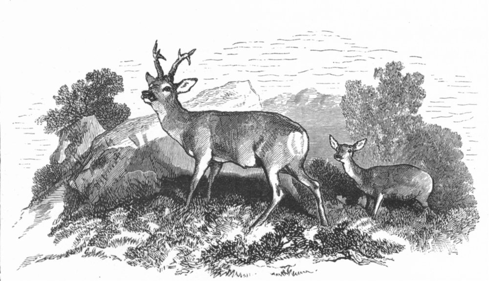 Associate Product DEER. Deer-Landseer c1880 old antique vintage print picture