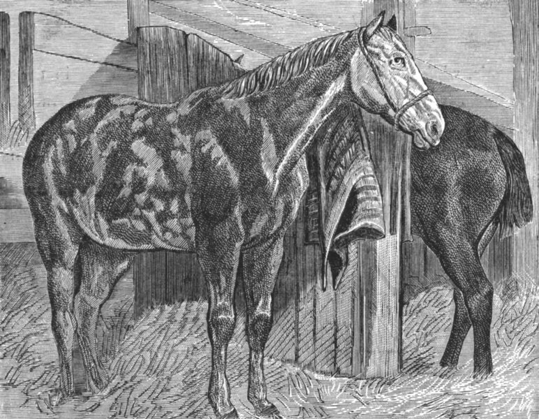 Associate Product HORSES. In the stable-Landseer c1880 old antique vintage print picture