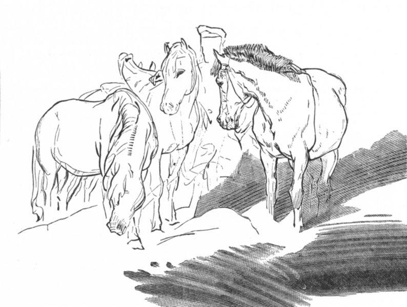Associate Product HORSES. Highlander &-Landseer c1880 old antique vintage print picture