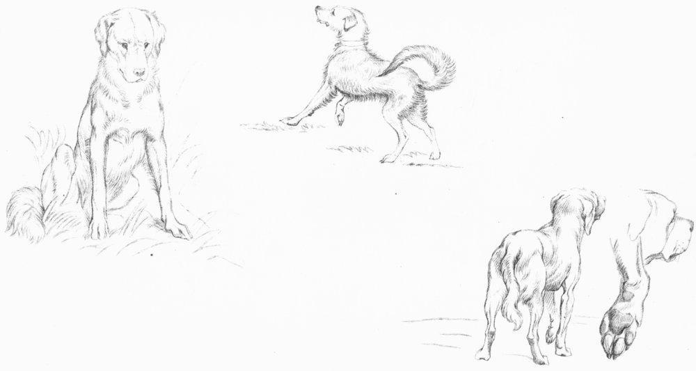 DOGS. Example 1-Landseer c1880 old antique vintage print picture