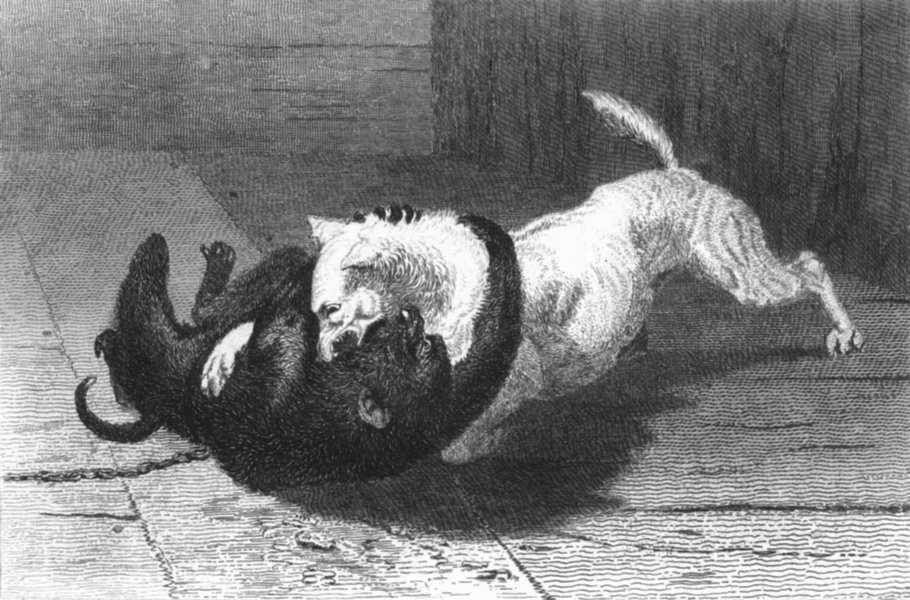 Associate Product DOGS. Example 10-Landseer c1880 old antique vintage print picture