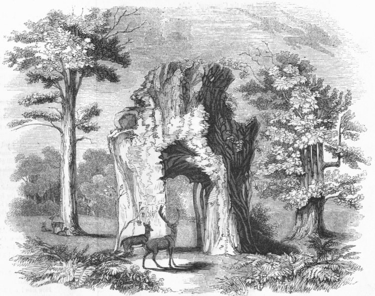 Associate Product WELBECK PARK. Oaks. Duke's Walking-stick, 7 sisters 1845 old antique print