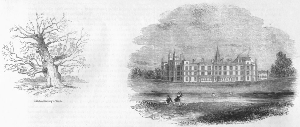 Associate Product CAMBS. Sidney's tree; North Burghley House 1845 old antique print picture