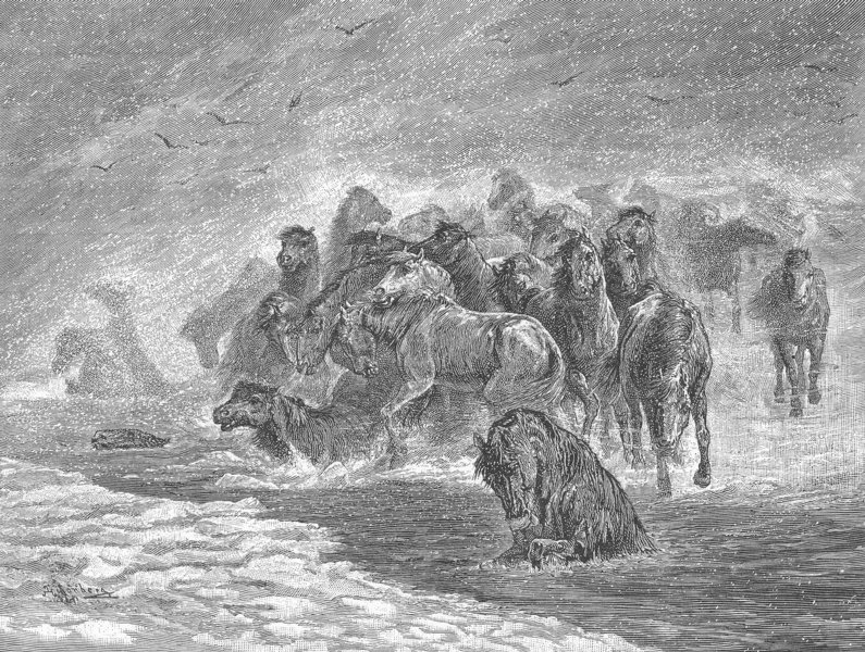 RUSSIA. Winter Storm in Russia - Wild Horses crossing the frozen Don 1893