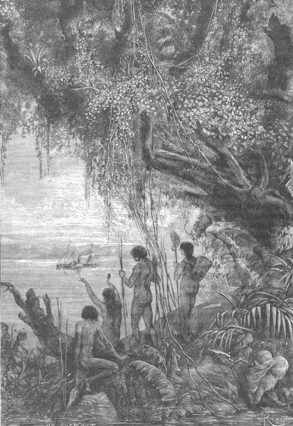 BRAZIL. Vegetation on the Lower Amazon 1893 old antique vintage print picture