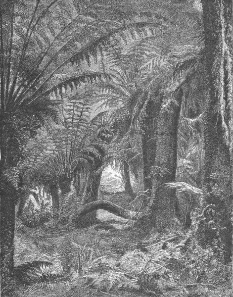 Associate Product AUSTRALIA. Tree-fern Scene in an Australian Forest 1893 old antique print