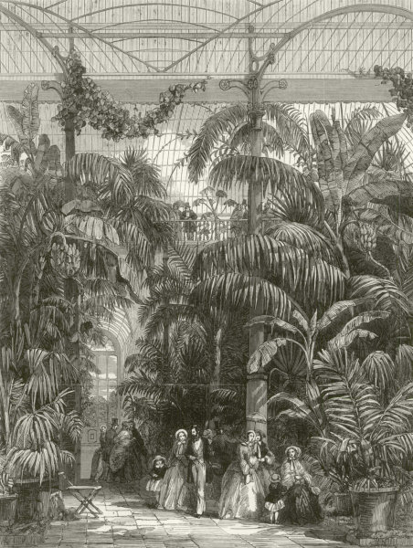 Associate Product Kew Gardens. Centre of the Great Palm House at the Royal Botanic Gardens 1852