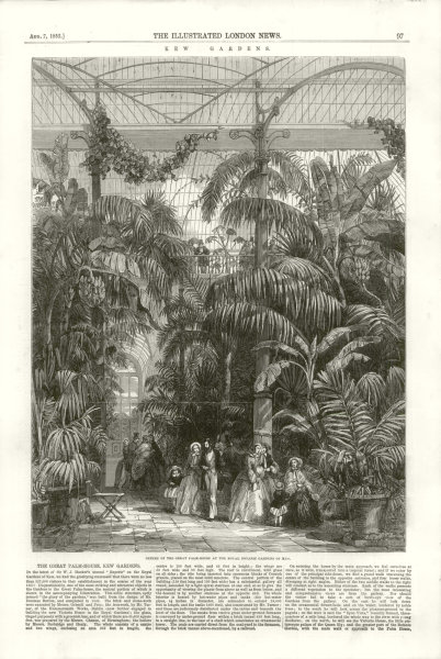 Kew Gardens. Centre of the Great Palm House at the Royal Botanic Gardens 1852