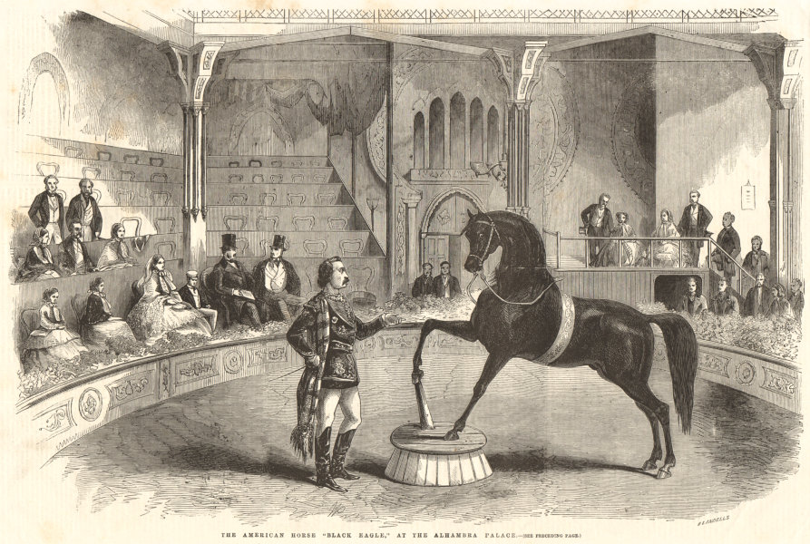 """Associate Product The American horse """"Black Magle"""" at the Alhambra Palace. London 1858 ILN print"""