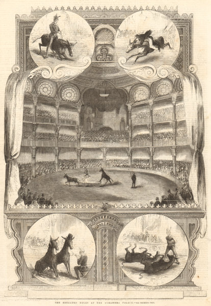 Associate Product The educated mules at the Alhambra Palace. London. Performing Arts 1858