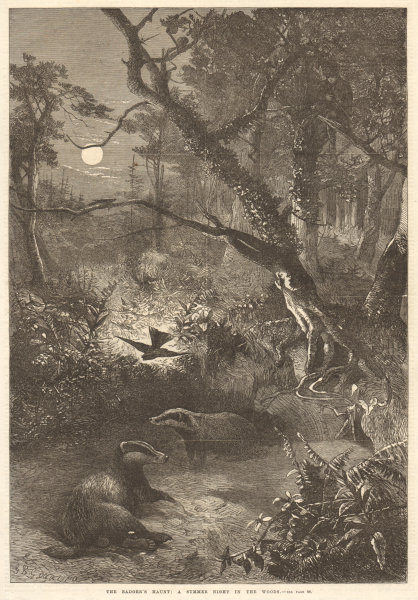 Associate Product The badger's haunt: a summer night in the woods. Mammals 1868 antique ILN page