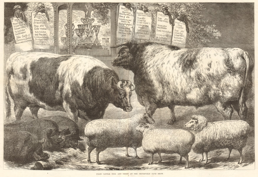 Associate Product Prize cattle, pigs, & sheep, at the Smithfield Club Show. London. Cows 1869