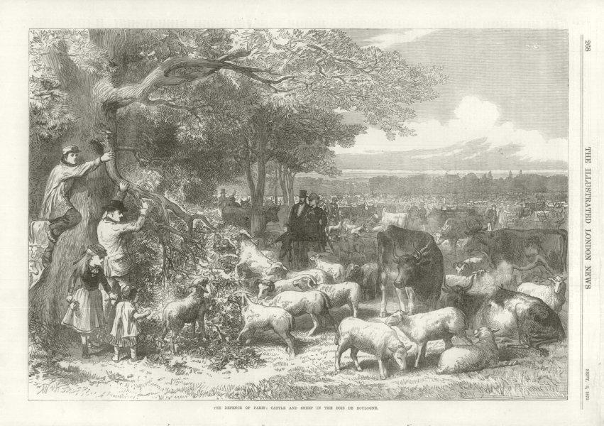 Associate Product The Defence of Paris: cattle & sheep. Bois de Boulogne. Franco-Prussian War 1870