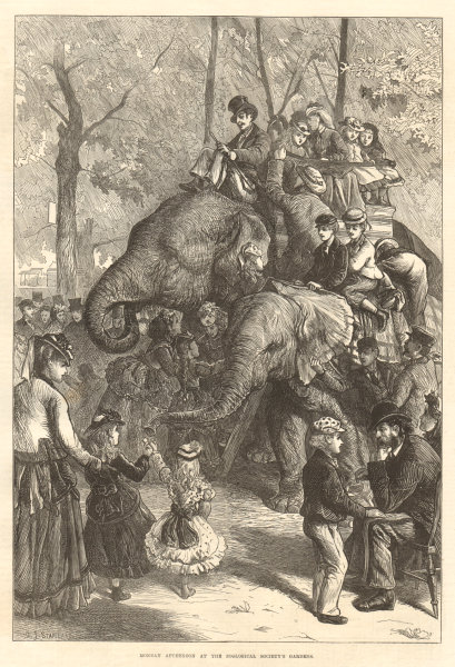 Associate Product Monday afternoon, Zoological Society's Gardens. London. Elephant rides 1871