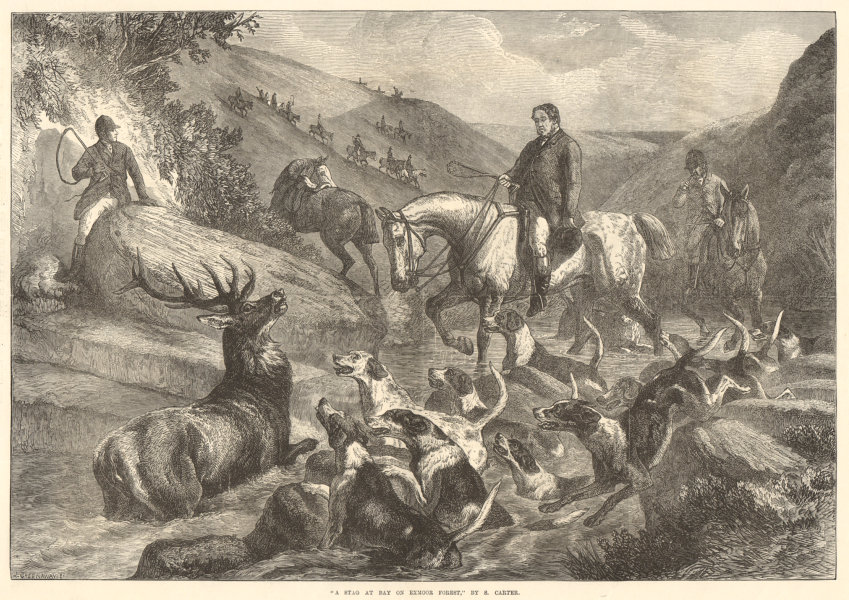 """Associate Product """"A stag at bay on Exmoor Forest"""", by S. Carter 1871 antique ILN full page print"""