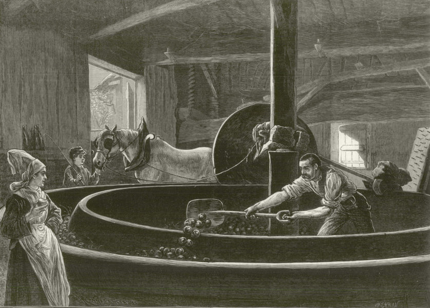 Associate Product Cider making in Normandy. France 1873 antique ILN full page print