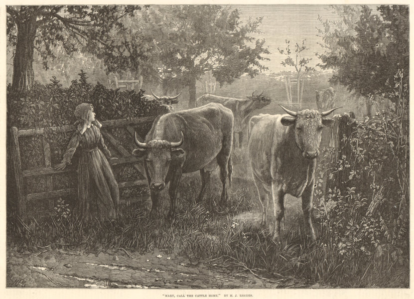 """Associate Product """" Mary, call the cattle home """", by H. J. Rhodes. Cows 1875 ILN full page print"""
