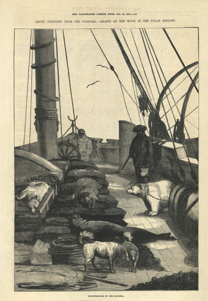 Associate Product Arctic expedition: Quarter-deck of the Pandora. Polar bear 1875 ILN full page