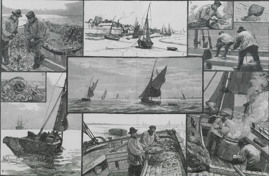 Associate Product Shrimping at the mouth of the Thames. Leigh-on-Sea. Fishermen 1883 ILN print