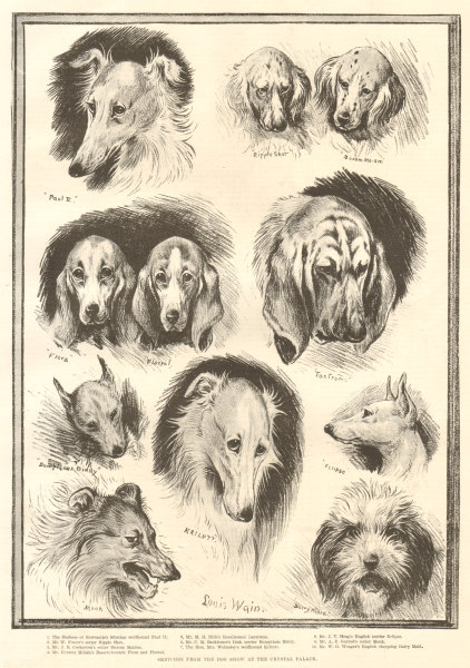 Associate Product Sketches from the dog show at the Crystal Palace. London 1890 antique ILN page