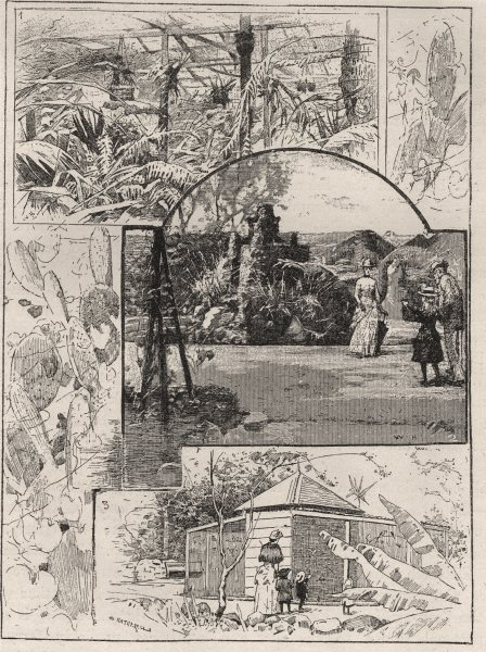Associate Product The Bush House, Acclimatisation Gardens. Fountains. Aviary. Brisbane 1890