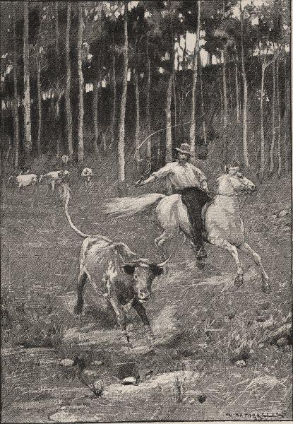A Stockrider. Australia 1890 old antique vintage print picture
