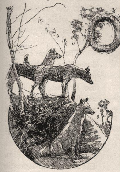Associate Product Dingoes. Australia 1890 old antique vintage print picture