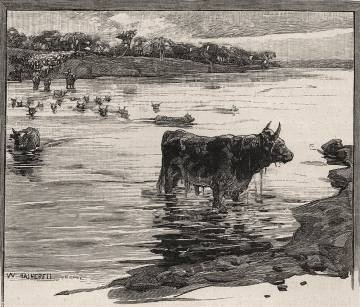 Associate Product Crossing The Warrego. Queensland. Australia 1890 old antique print picture