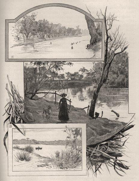 Murray river swans. Murrumbridge at Wagga Wagga & Snowy River. Australia 1890