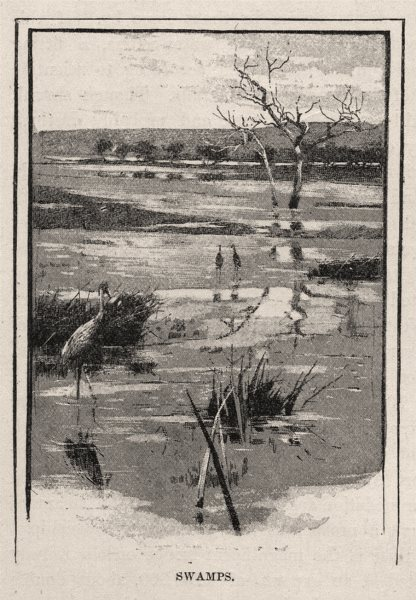 Associate Product Swamps. The Murray river basin. Australia 1890 old antique print picture