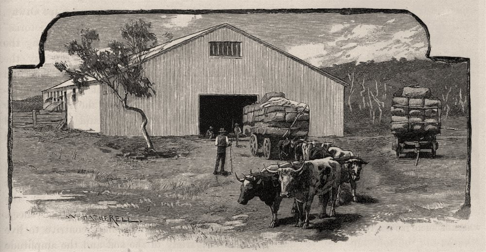 Wool Shed. Sheep farming. Australia 1890 old antique vintage print picture