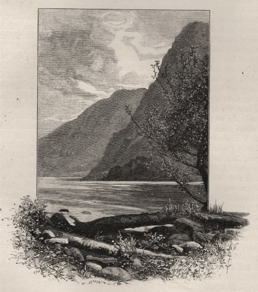 Associate Product Another View of Wet Jacket Arm. The West Coast Sounds. New Zealand 1890 print