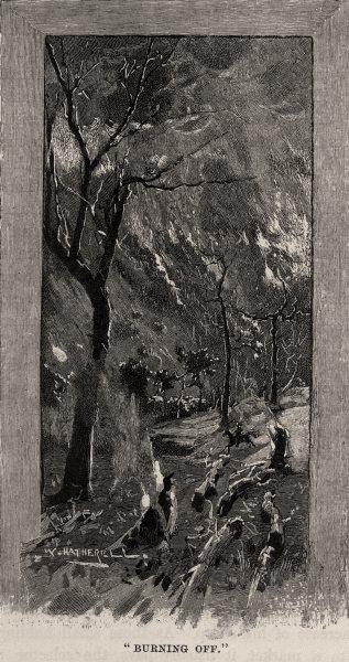 "Associate Product ""Burning Off"". Australia 1890 old antique vintage print picture"