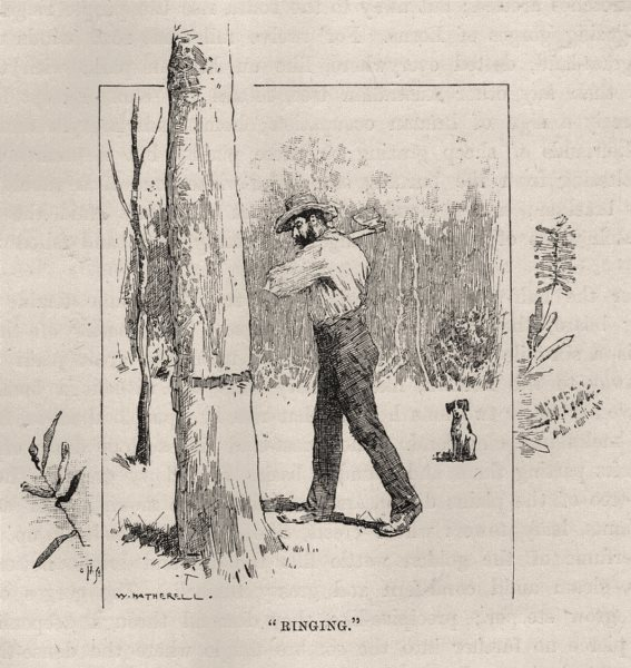 "Associate Product ""Ringing"". Australia 1890 old antique vintage print picture"