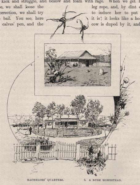 Associate Product Bachelors' Quarters and A Bush Homestead. Australia 1890 old antique print