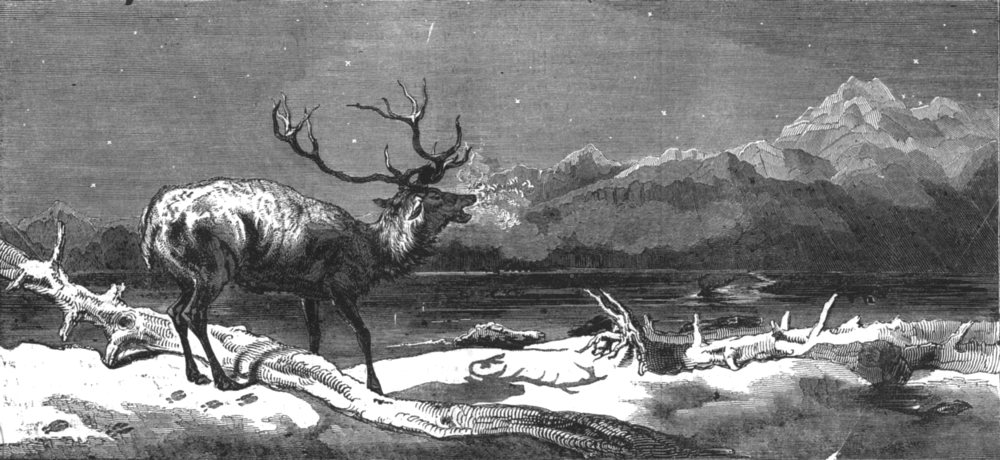 Associate Product DEER. Coming events cast their shadows before them, antique print, 1844