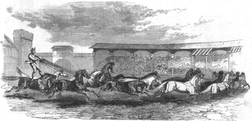 Associate Product PARIS. The Paris Hippodrome. Seventeen horses driven, antique print, 1860