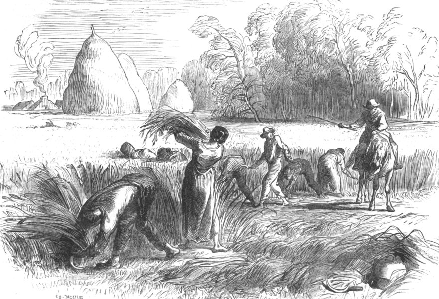 Associate Product FRANCE. Harvest in France-Reaping, antique print, 1851