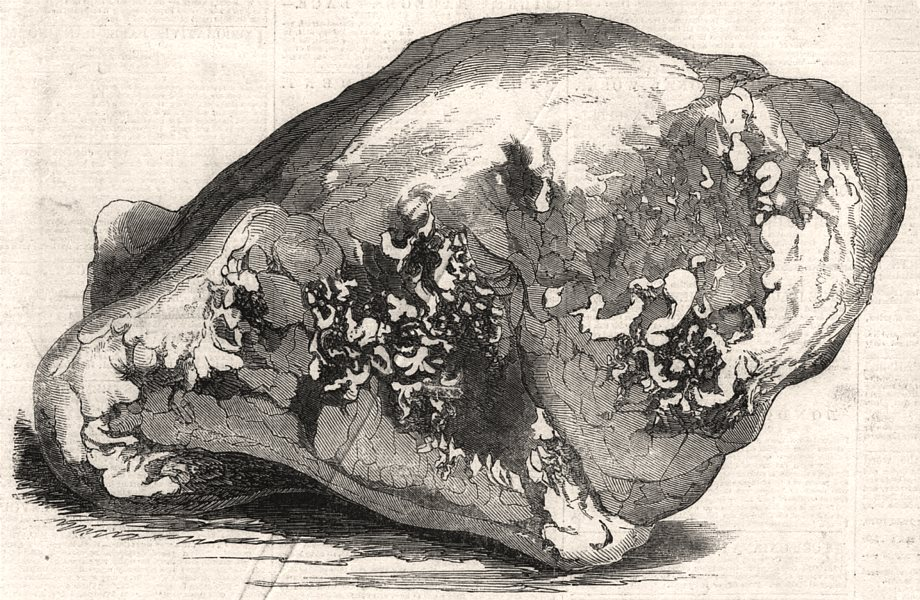 Associate Product Lump of gold from California - value £500, antique print, 1850