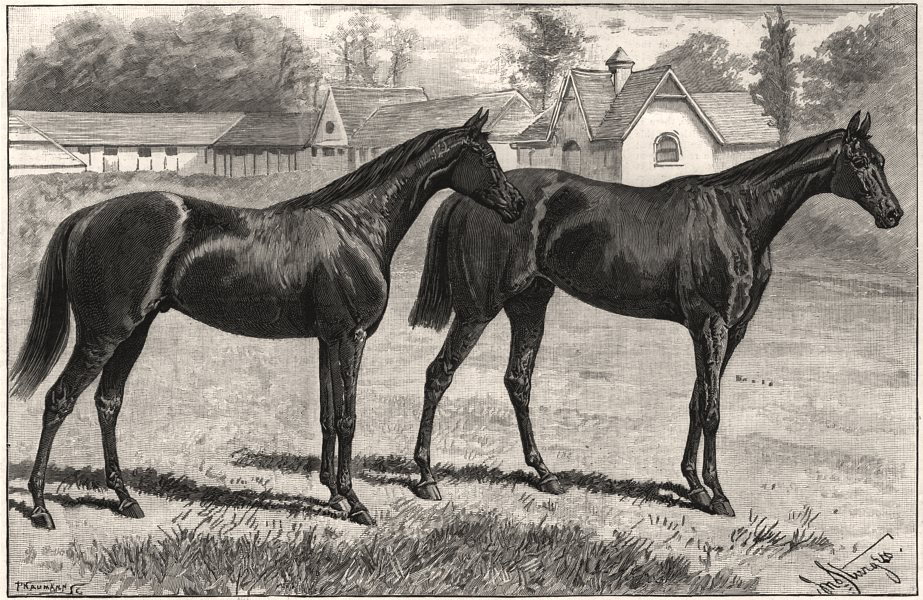 Associate Product Newmarket racing. Childwick. Blundell Maple's racehorses. Common. Suffolk, 1891