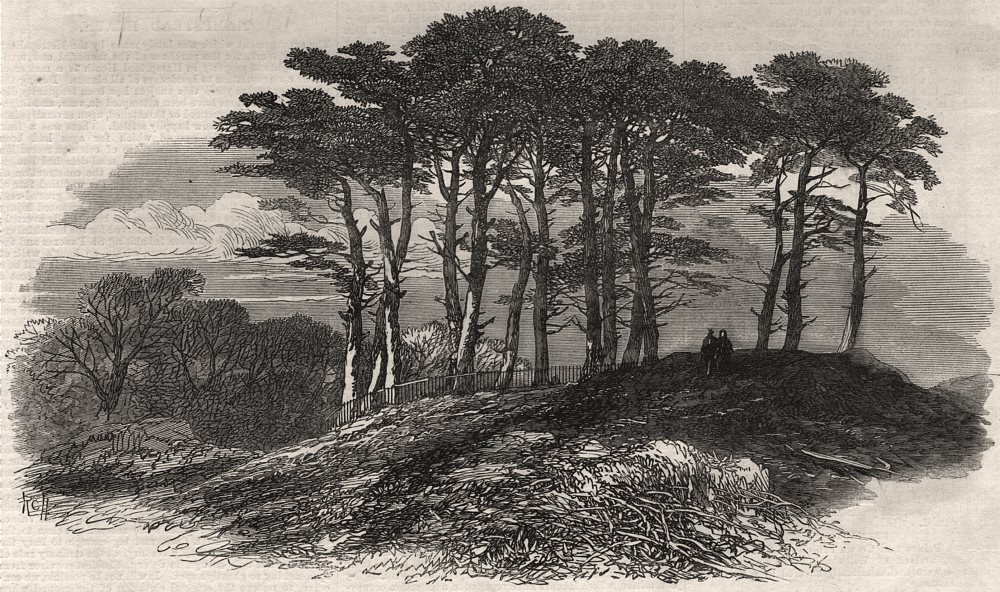 Associate Product Firs near North End; sketches on Hampstead Heath. London, antique print, 1871