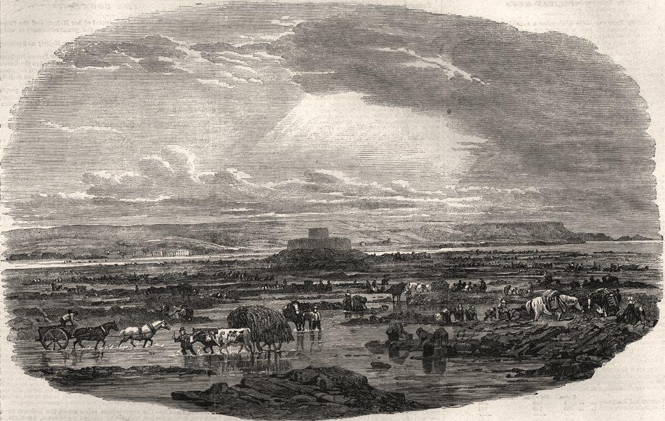 The Calais fetes. Gathering the Vraic or sea-weed. Pas-de-Calais, print, 1852